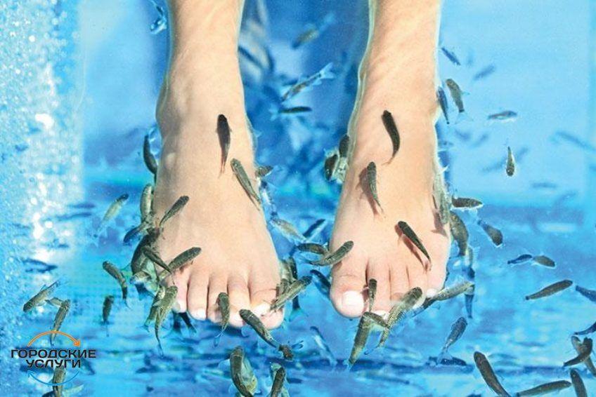 Массаж, спа-программы для всех, шугаринг, узи-чистка лица, рыбки, фито-бочки...