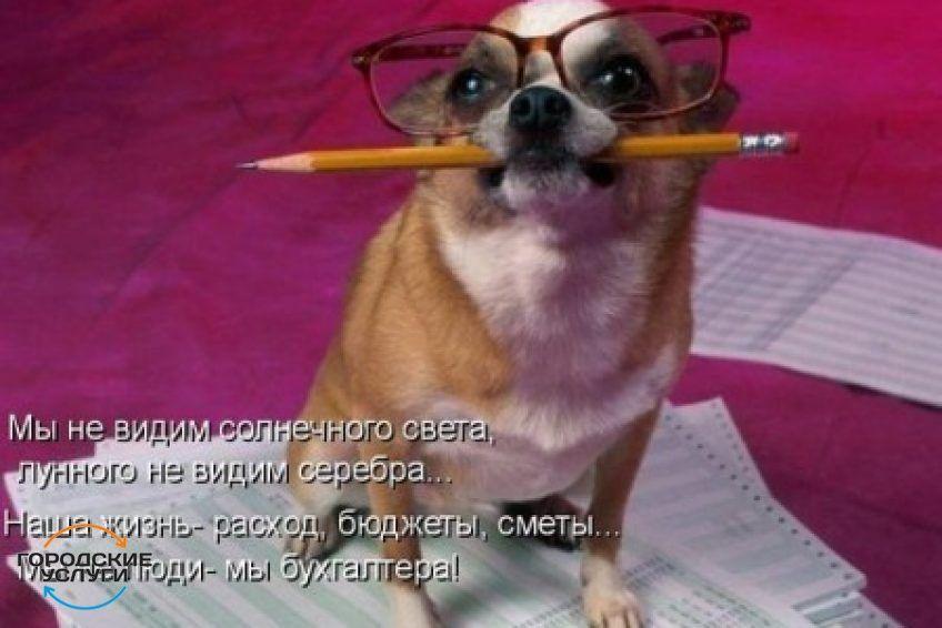 Главный бухгалтер ООО и ИП